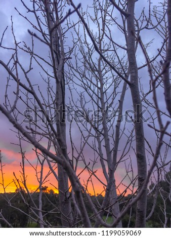 Winter sunset behind a silhouette of bare branches Zdjęcia stock ©