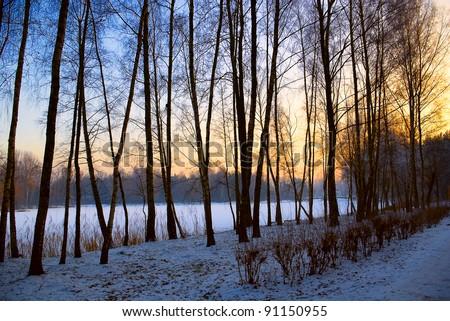 winter sunset landscape, snow garden tree view