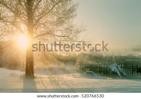 Winter sunset landscape with the frosty trees and sunlight beams  #520766530
