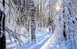 Winter sunset snow forest scene. Sunset winter snow forest trail. Winter snow forest sunset. Sunset in winter snow forest