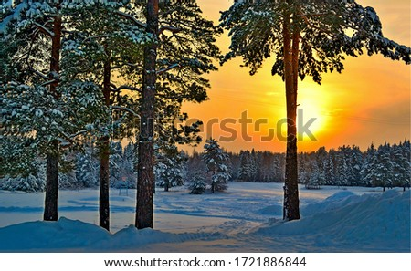Winter sunset snow forest trees. Sunset winter snow scene. Winter sunset snow forest view. Sunset winter snow