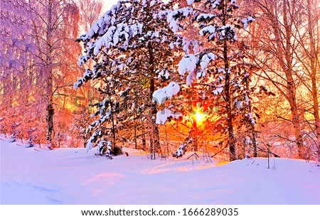 Winter sunset snow forest trees view. Sunset winter forest scene. Winter snow forest sunset background. Sunset winter snow forest