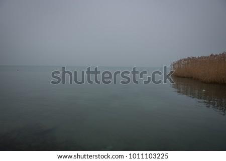 winter swan lake #1011103225