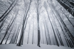 Winter Tale.Foggy  Landscape