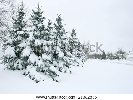 Winter Theme: Snow covered tree branches, outdoors, city street