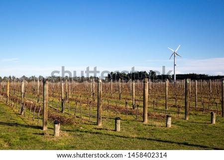 Winter time in a Canterbury vineyard with dormant and pruned grapevines in rows on wire support frames, New Zealand #1458402314
