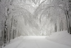 Winter time in forest with road