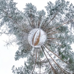 Winter tiny planet in snow covered pinery forest. transformation of spherical panorama 360 degrees. Spherical abstract aerial view in forest. Curvature of space.