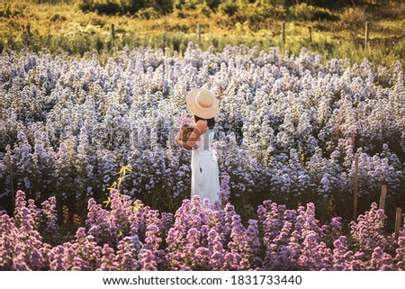 Winter travel relax vacation concept, Young happy traveler asian woman with dress sightseeing on Margaret Aster flowers field in garden at Chiang Mai, Thailand