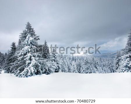 Winter tree boron / mountain ski center Kopaonik Serbia / wide landscape