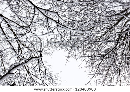 Winter tree conceptual black and white photo