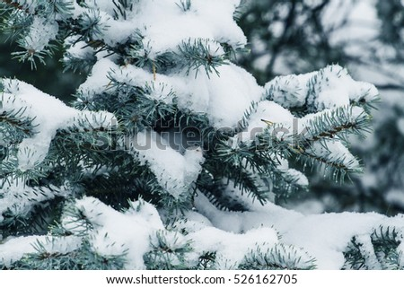 Stock Photo Winter tree covered with snow as background. Close up
