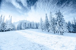 Winter tree in snow.  Carpathian, Ukraine, Europe. Bokeh light effect, soft filter. Instagram toning effect.