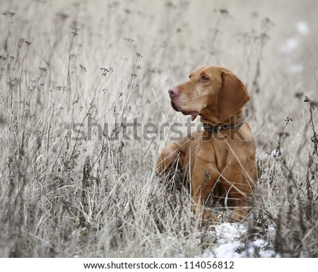 winter treea - stock photo
