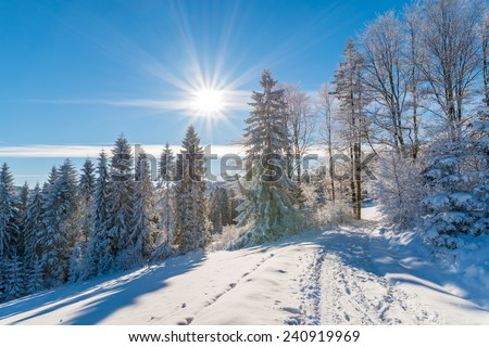 Winter trees and road in Beskid Sadecki Mountains with sun on blue sky, Poland