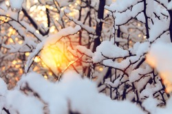 Winter, trees, branches, snow, sun, thaw.