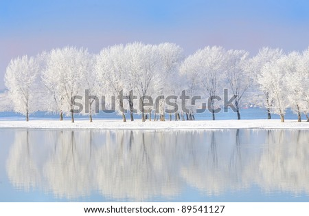 winter trees covered with frost