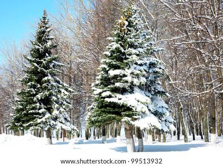 Winter trees in April