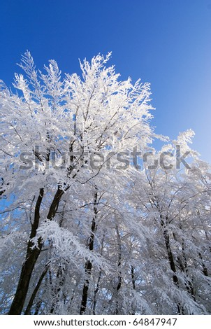 Winter trees in forest under snow and blue sky background.