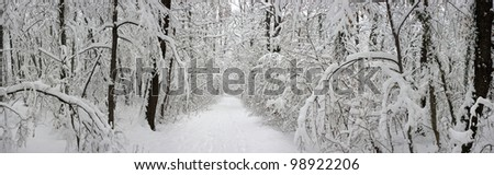 Winter trees in forest with snow on them