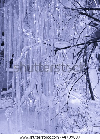 Winter. Trees in ice are frozen Very beautifully! Blue tone