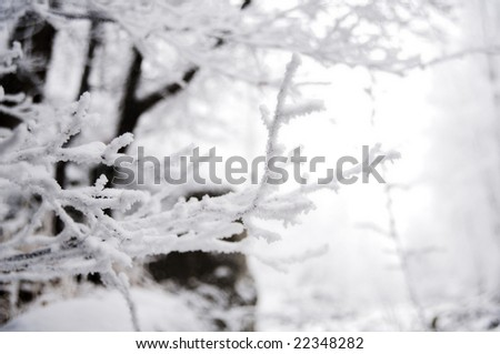Winter trees in mountains, in the evening #22348282