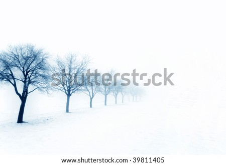Winter trees in snow