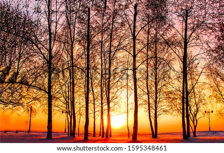 Winter trees silhouettes sunset background. Sunset trees silhouettes in winter. Winter sunset trees. Sunset winter trees