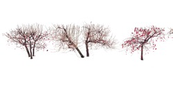 Winter trees. Viburnum trees in a row among pure white snow. Trees, isolated on white background. Simplicity and beauty of nature. Zen like image.