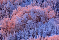 Winter twilight, cold nature in forest. Orlicke hory, Czech republic. Mountain landscape with trees. Pink morning light before sunrise.