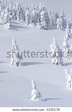winter view of snow covered mountain and trees