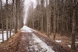 Winter view of the Elora Cataract Trailway, Ontario, Canada