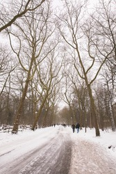 winter view of the white Vondelpark under the snow in Amsterdam with people walking on a path under the snowy tree