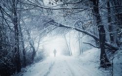 winter walk on forest path