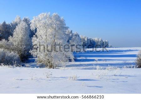 Winter winter winter #566866210