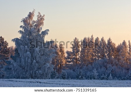 winter winter, winter-tide, winter-time,  hibernate, he coldest season of the year, in the northern hemisphere from December to February and in the southern hemisphere from June to August.