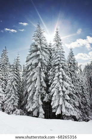 Winter with sunshine