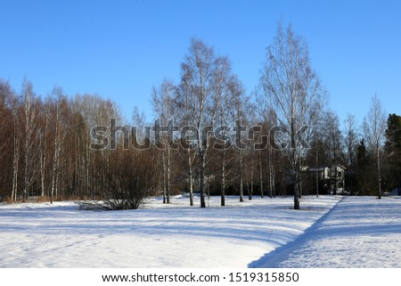 Winter wonderland called Finland during winter. In this photo you can see plenty of snow on ground, forest and clear blue daytime sky. White scenic landscape from Scandinavian winter. Color image. #1519315850