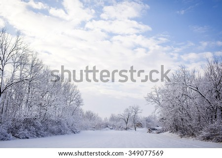 Winter wonderland in snow covered forest