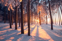 Winter wonderland. Winter forest. Colorful sunrise in forest. Winter nature. Christmas landscape.