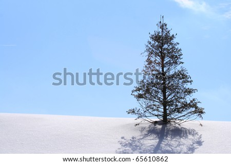 Winter Wonderland with Christmas Tree on Hill