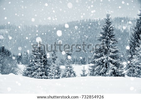 Winter wonderland with fir trees. Christmas greetings concept with snowfall
