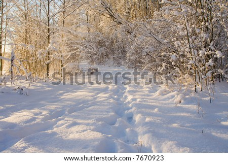 Winter wood landscape with a snow on branches