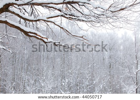winter wood landscape with branch under snow