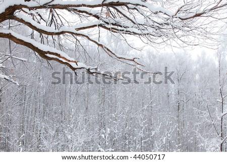 winter wood landscape with branch under snow