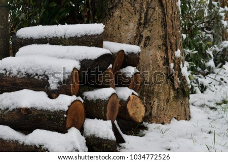 Winter wood log pile. A mosaic of wood stocks covered by a mantle of snow. #1034772526