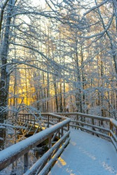 Winter wooden path (bridge) in swedish woods. Snowy day in scandinavian forest. Bright winter day. Nature wallpaper. Photo with trees and road.