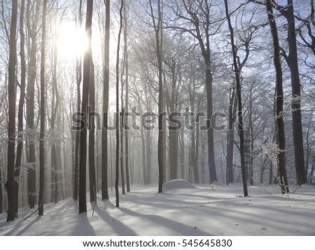 Winter woods 3 #545645830