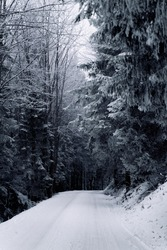 Winterlandscape in the forest while snow is falling the ground