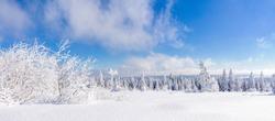 Winterlandscape of Black Forest near Schliffkopf, Germany